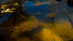 Fishes in the stream...