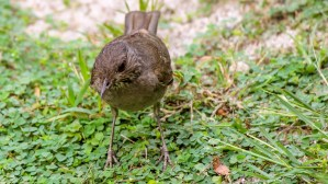 Brown Bird!