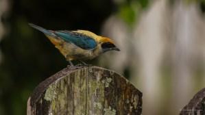 Multi colored bird...