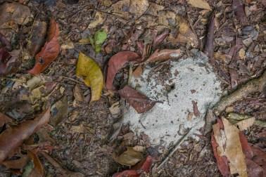 Nest in the ground