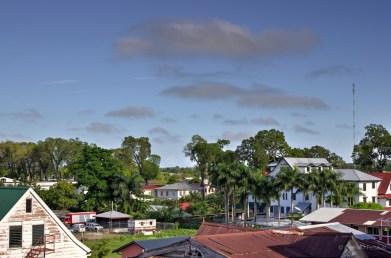 Bushy skyline