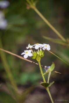 Flower in the wild