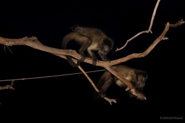 Bar monkeys