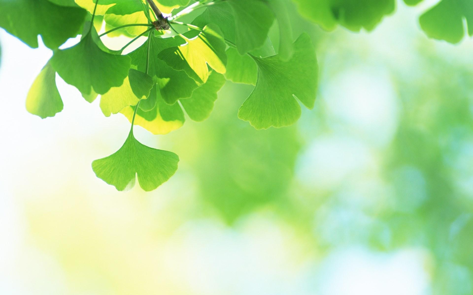 Fresh Green Leaves Wallpaper