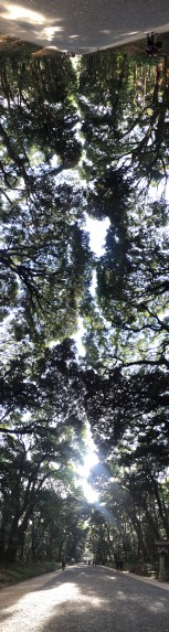 A panorama of the treetops in Yoyogi park.