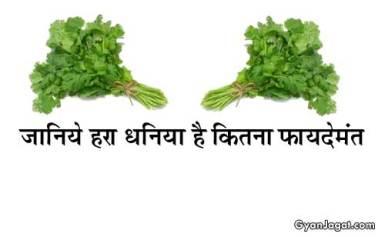 जानिये! हरा धनिया स्वास्थ्य के लिए है कितना फायदेमंत!!