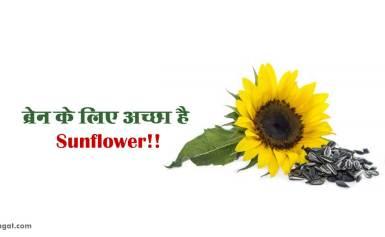 ब्रेन के लिए अच्छा है Sunflower!!