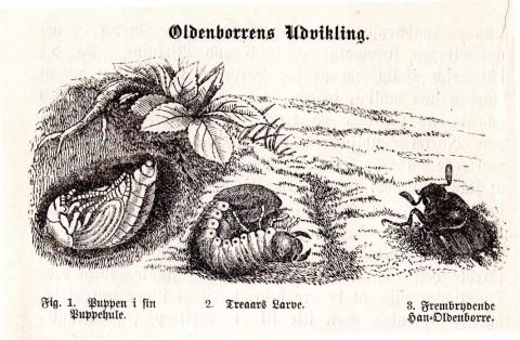 oldenborere 2bergsøe148