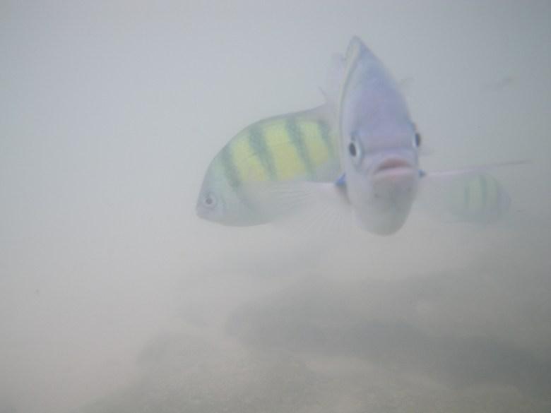 fiskar som stirrar