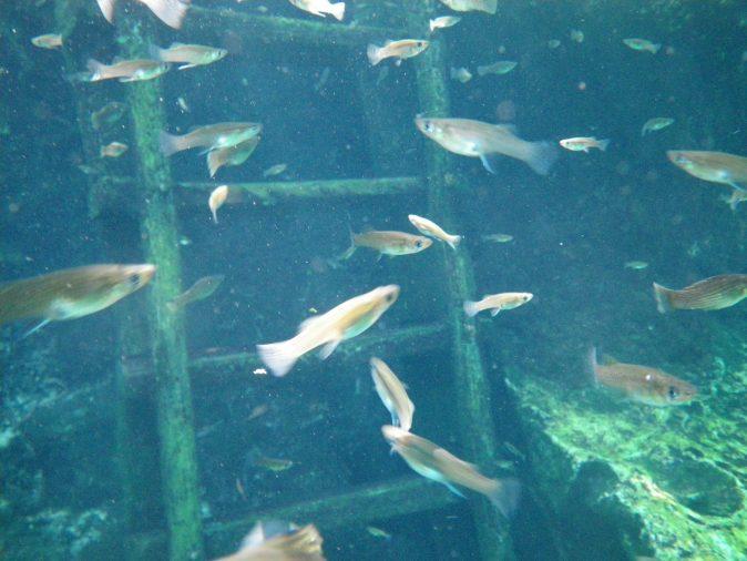 stege och fiskar