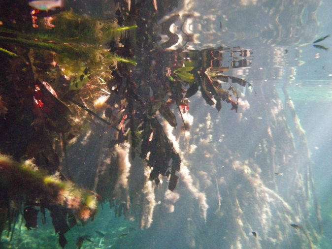 under vattnet i cenote