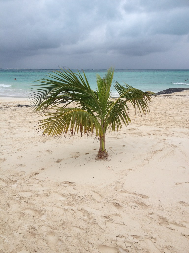palm på stranden