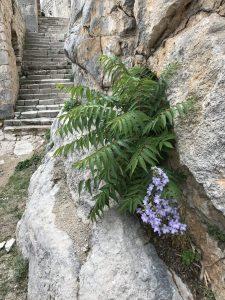 blomma i bergsskreva