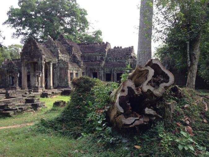 stump and ruin
