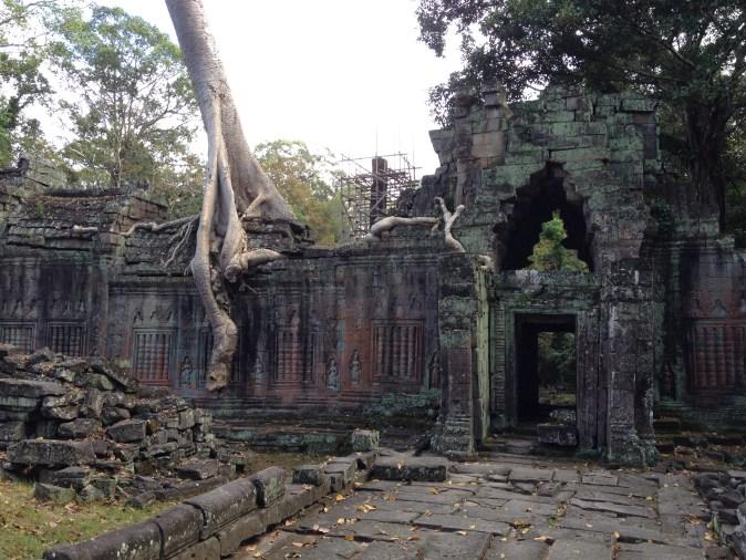 rötter på ruin