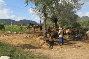 man som förbereder våra hästar