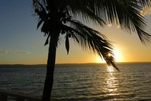 solnedgång vid hav och palm