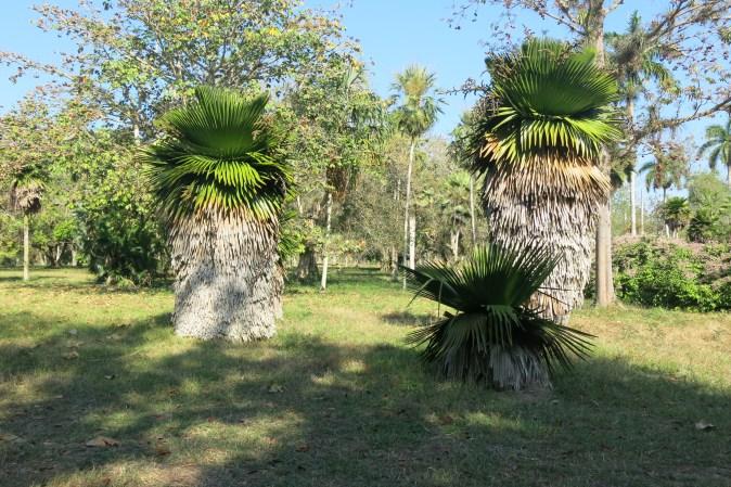 palmer i botaniska trädgården