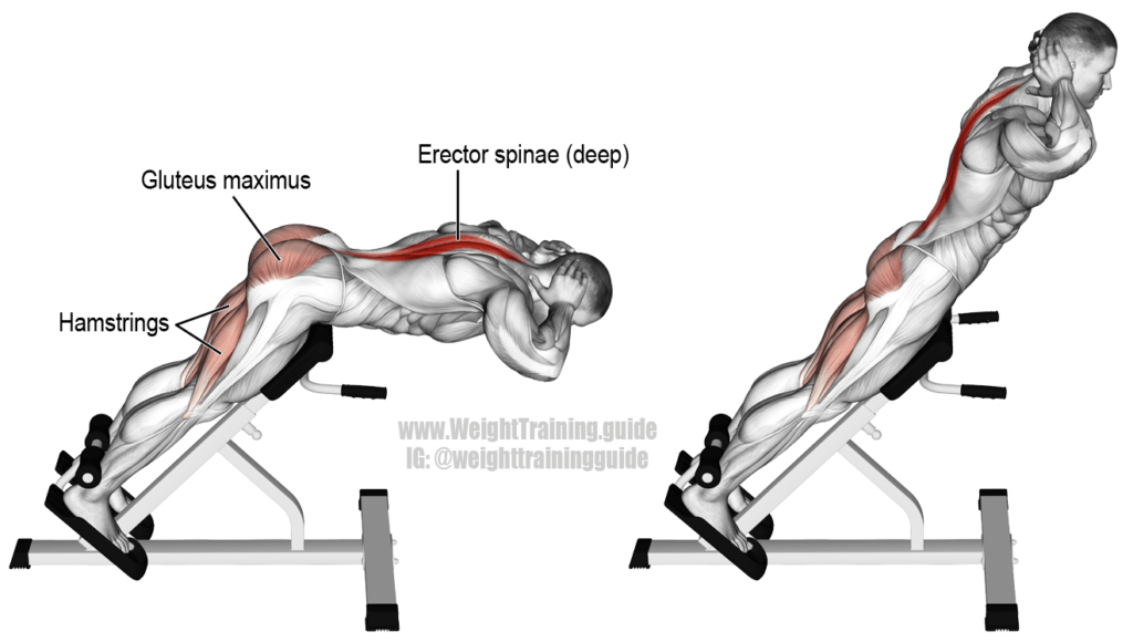 hyperextension- lower back exercises