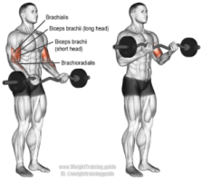 the best biceps exercises