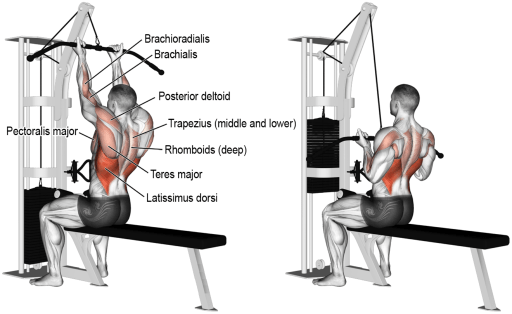 the best upper back exercises