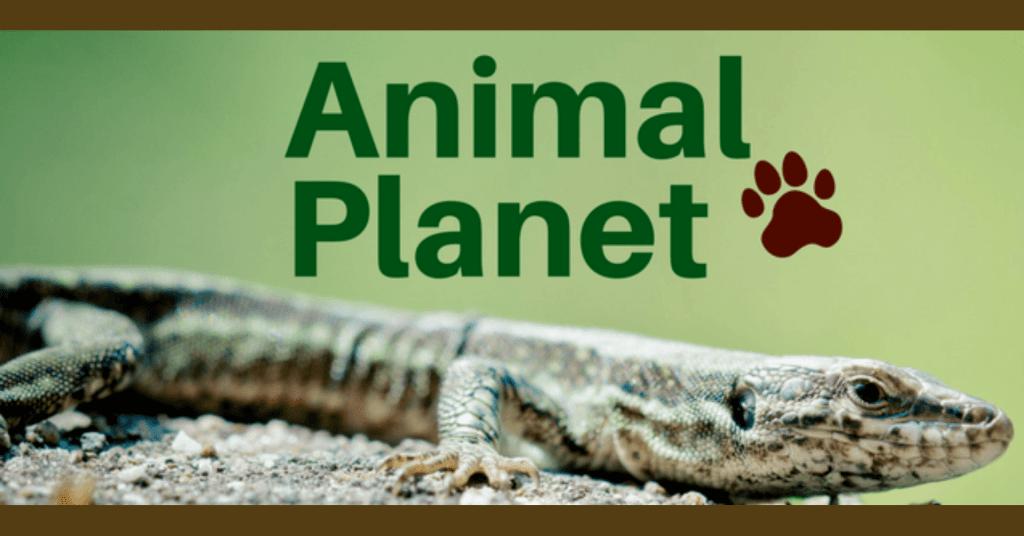 Animal - July 29