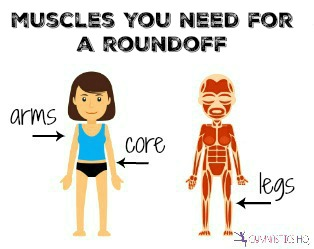 muscles you need for a roundoff