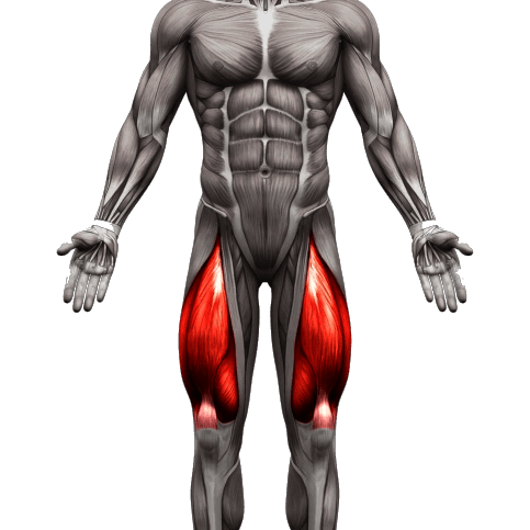 quads muscle used12 1