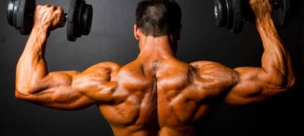 Shoulders - From bodybuilding-wizard.com