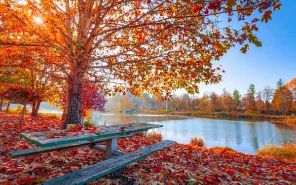 5 Λόγοι να χαρείς που ήρθε το Φθινόπωρο