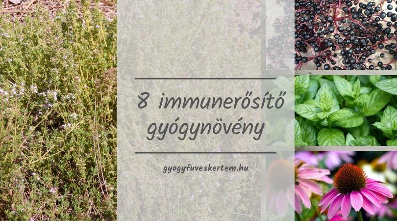 8 immunerősítő gyógynövény