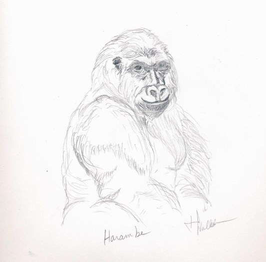 Harambe- a tribute