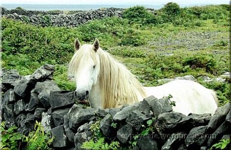 White Horse, Inis Mór, Aran Islands, 2003