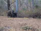 Elephants at Kabini Backwaters