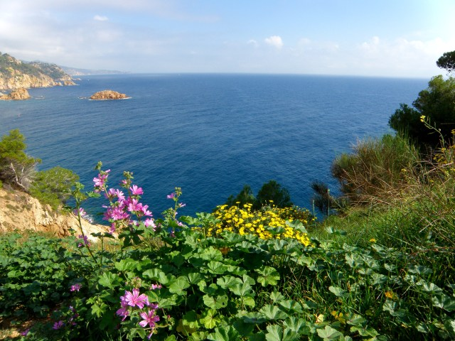 flowers on mediterranean sea
