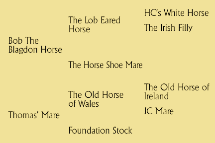 The Loveheart Mare Pedigree