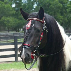Latcho-Drom-Bridle-Red