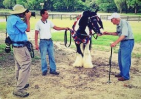 100 yr old man meets Gypsy Vanner