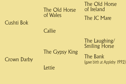 Cushti Bok's Valley Pedigree