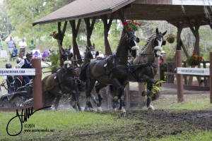 The Live Oak International combined driving event is a must-see for all horselovers and is held annually in March