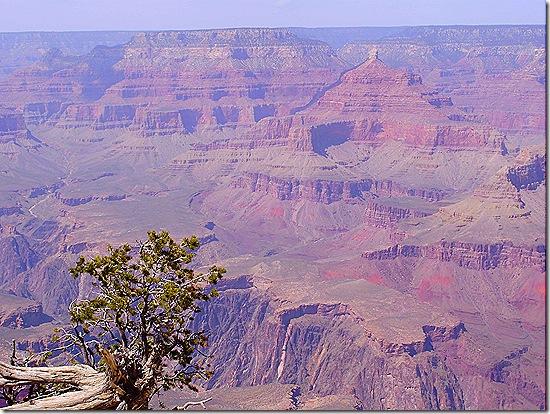 Grand Canyon view 5