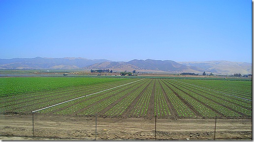 Produce fields 2