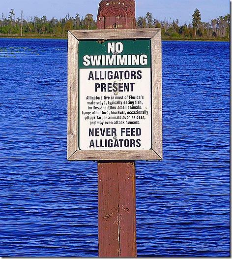 TTN Orlando alligator sign 2