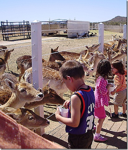 Kids feeding deer