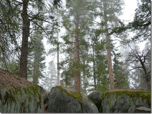 Misty trees boulders 2
