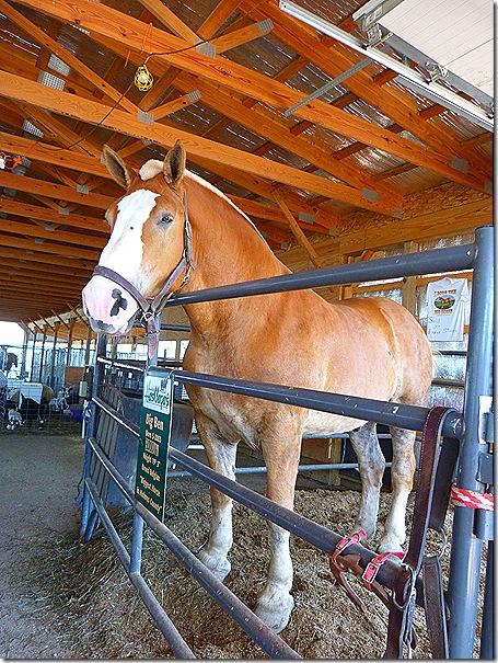 Big Ben horse