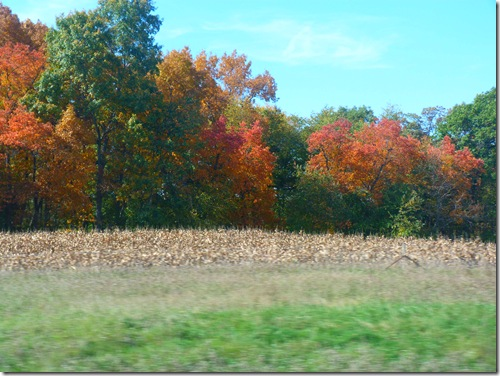 Fall foilage 2