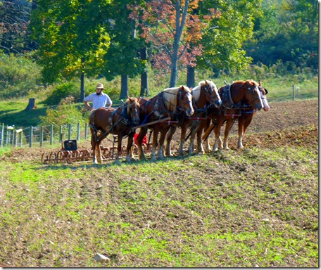 Five horse team