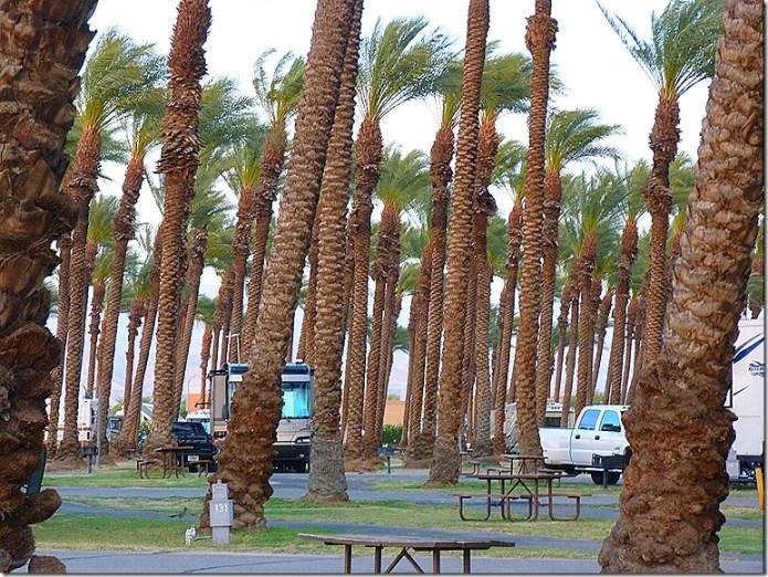 Palm Springs TT