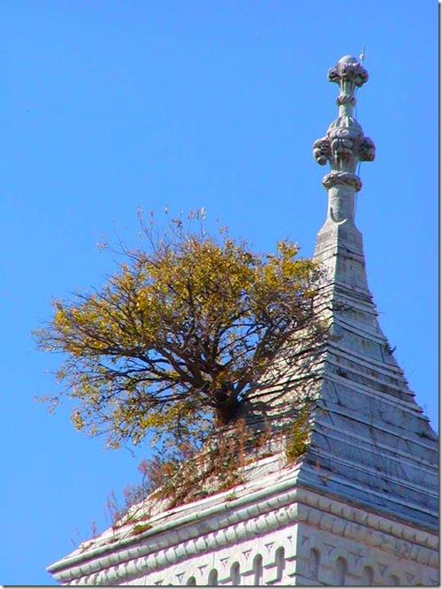 Tower tree close